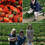 Strawberry Picking and Strawberry Sorbet
