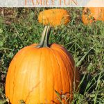 Pumpkin Patch Family Fun