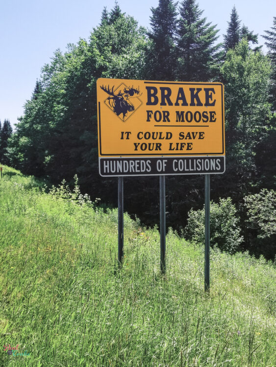 Brake for Moose sign in New Hampshire