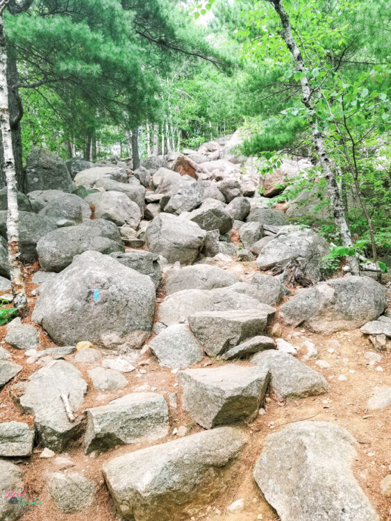 rocks on path leading to top of bubble rock at acadia national park