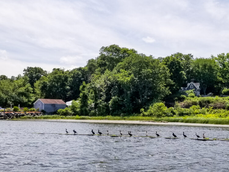 birds on Connecticut river
